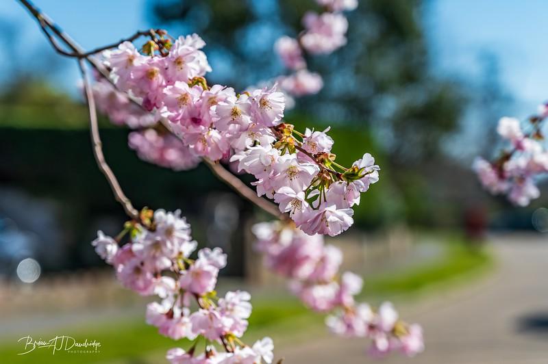 Spring blossom-2106.jpg