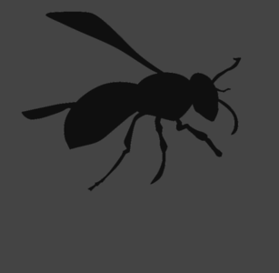 ANIMALS: INSECTS