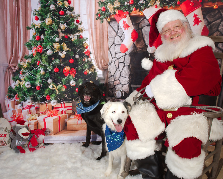 Purrrfect Bark Christmas 2018