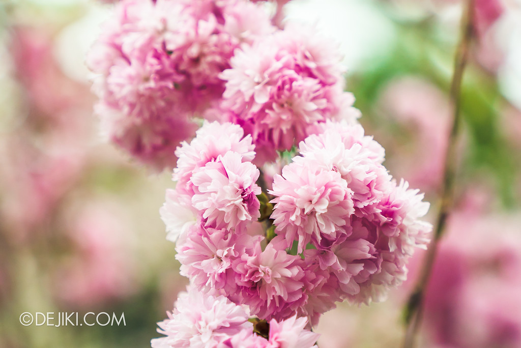 Gardens by the Bay - Blossom Bliss floral display / Pink