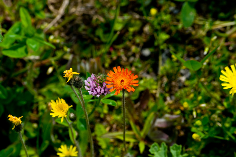 These little bright orange, purple, and yellow flowers were all along the boardwalk
