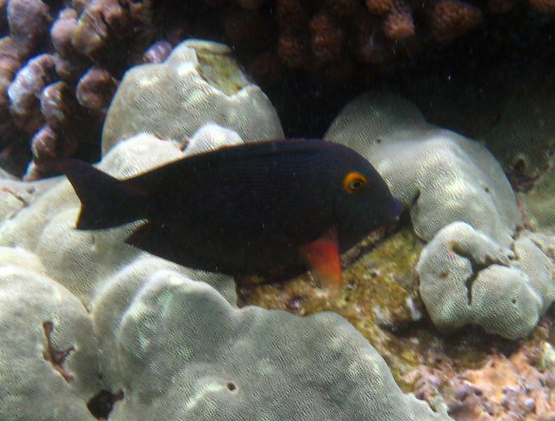 477- 20080416- Hawaii 20-Snorkelling IMG_0680.jpg