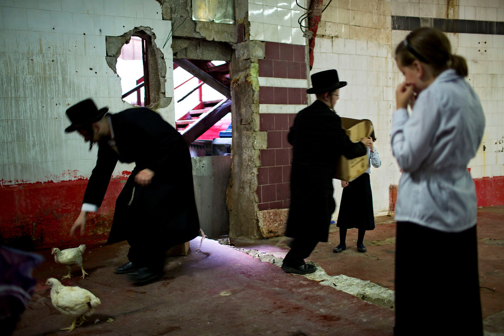 . An ultra-Orthodox Jewish man checks the health of a chicken, later to be slaughtered as part of the Kaparot ritual in the ultra-Orthodox city of Bnei Brak near Tel Aviv, Israel, Wednesday, Sept. 11, 2013.  (AP Photo/Oded Balilty)