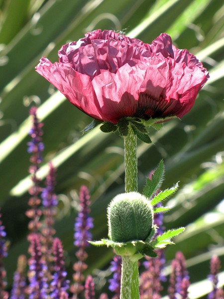 amh FLOWERS (1064).jpg