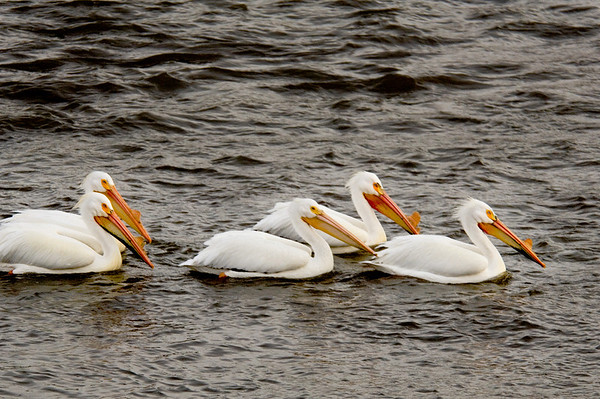 White Pelican Gallery