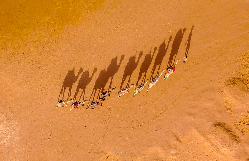 camel-drone.jpg