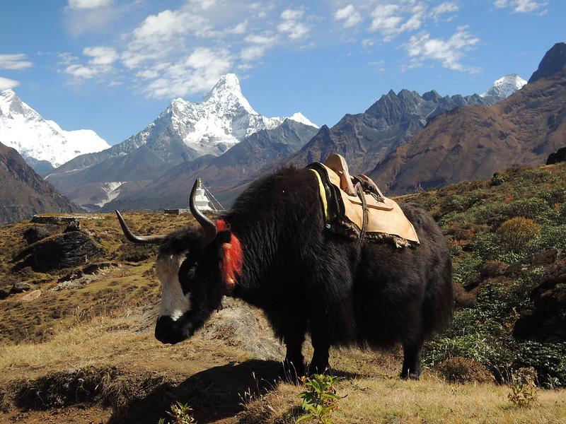 2013-Nepal-2719.jpg