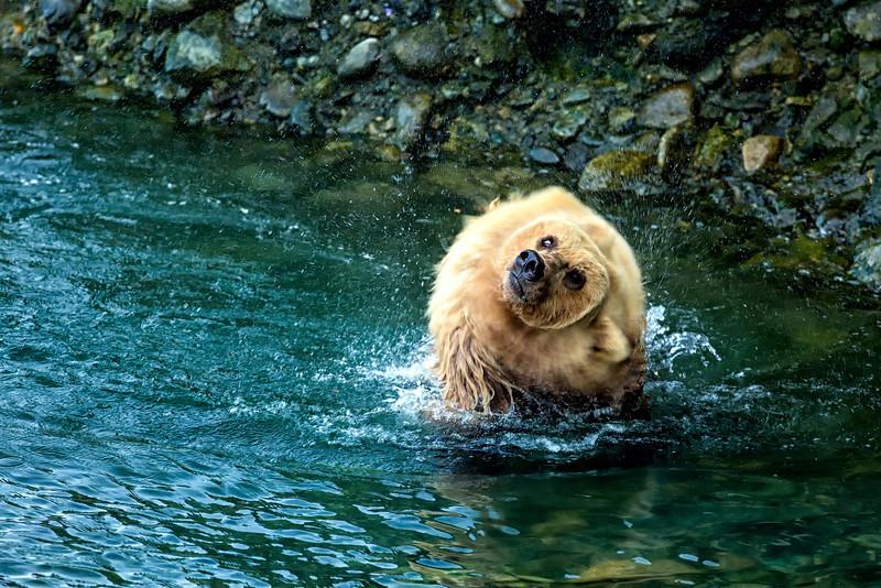 Alaska_2013_FH0T9465.jpg