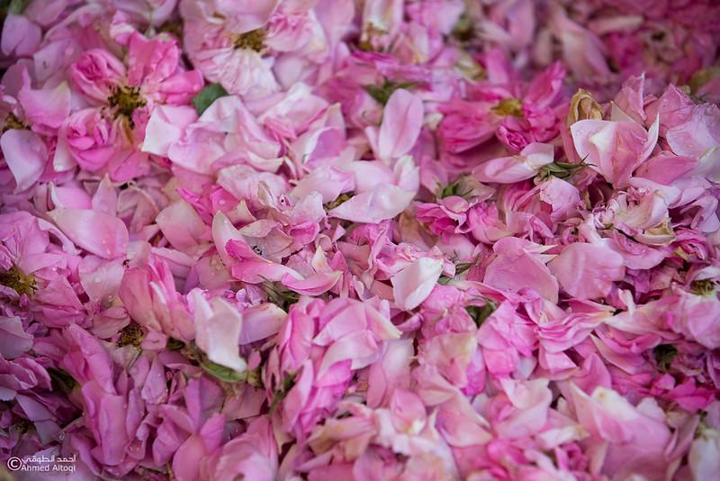 Roses Water (36)-Aljabal Alakhdhar-Oman.jpg