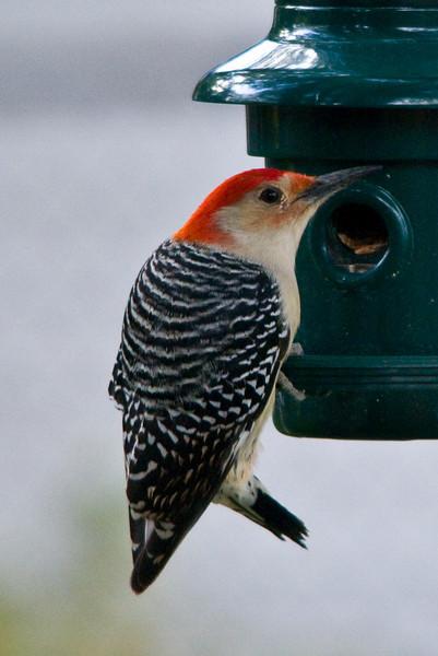 backyard_birds-1027