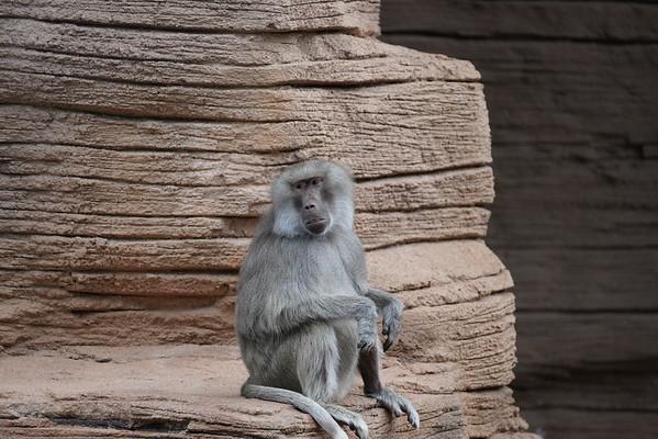 Zoo Memorial Day 2021