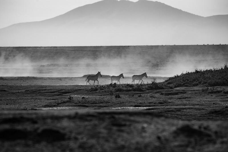 Tanzania_Feb_2018-366.jpg