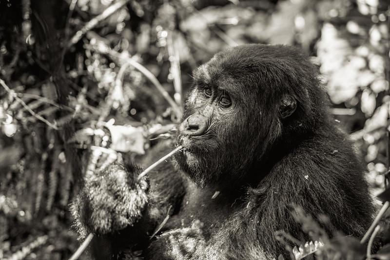 Uganda_T_Gor-151.jpg