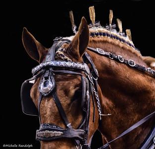 Horse edits