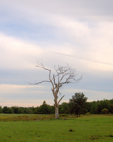 Jennings Tree 3.jpg