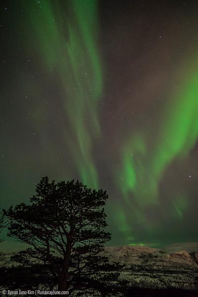 Nov.15_Northern Lights-6108128.jpg
