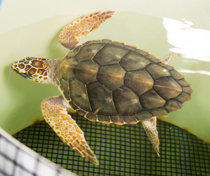 Next day, we visit the NOAA Loggerhead Sea Turtle rescue unit.