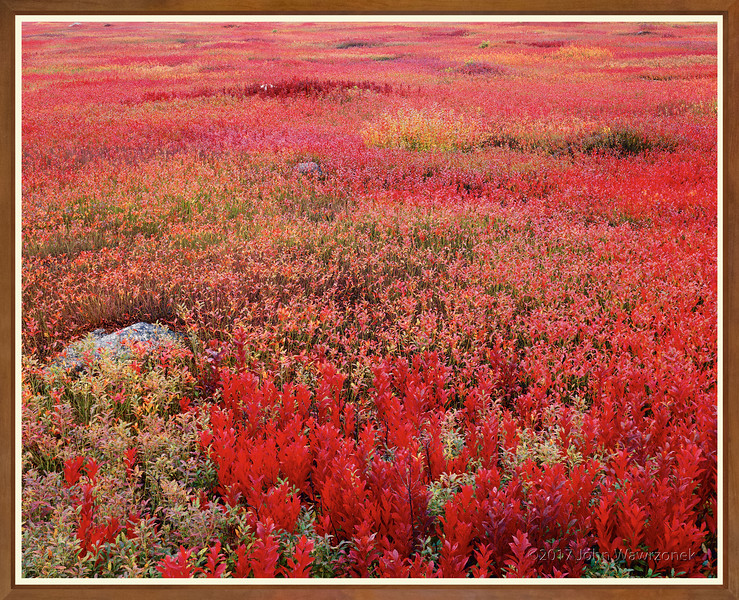 Blueberry Field At Twilight
