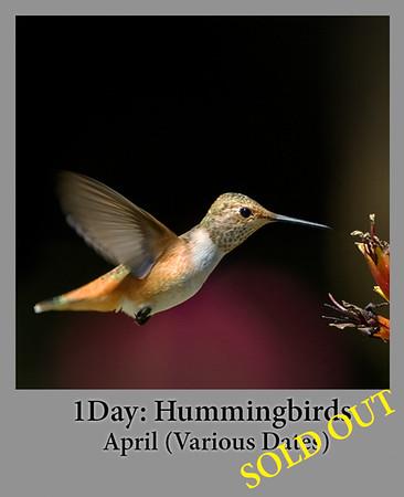 04-12-2017 1 Day Hummingbirds