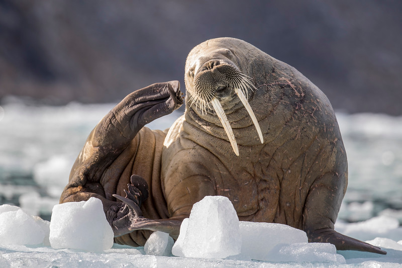 3773_SvalbardTimoT.jpg