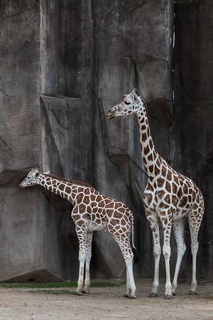 7.15.18 Milwaukee County Zoo
