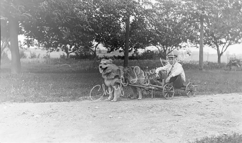 Boy-Cart-Shaggy-Dog-1-WM.jpg