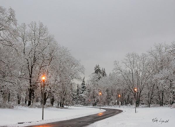 Snowy Oaks