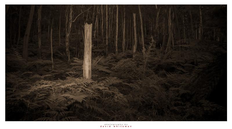 Totem in the Fern Grove.jpg