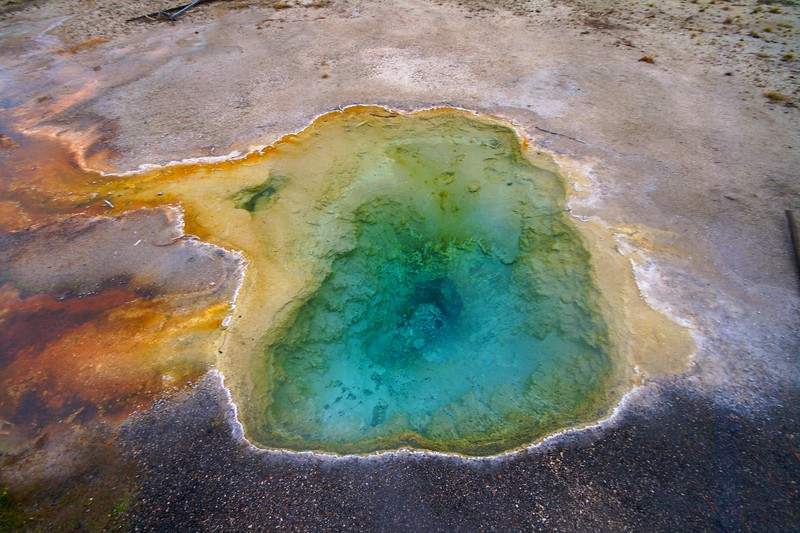 Bacteria that thrive at different temperatures create the color of thermal pools [September; Yellowstone National Park, Wyoming]