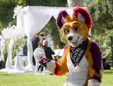 Rose Bowl Furmeet (May 2016)