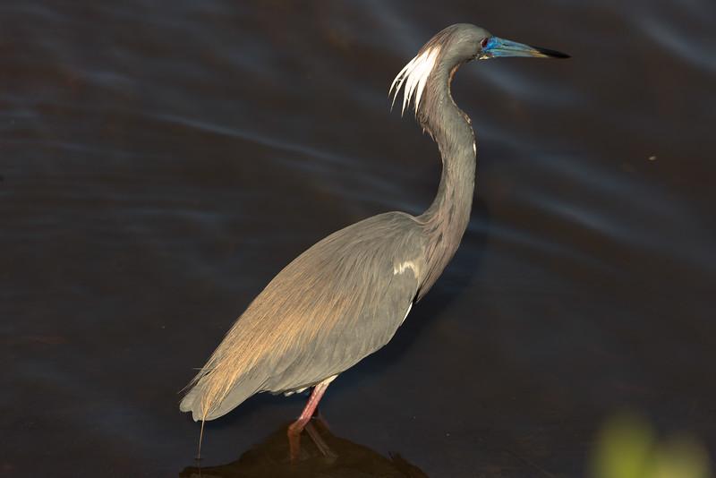 19-Sept North America Birds-8820.JPG