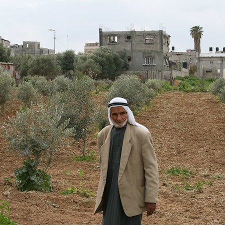 Man and his Olive Grove