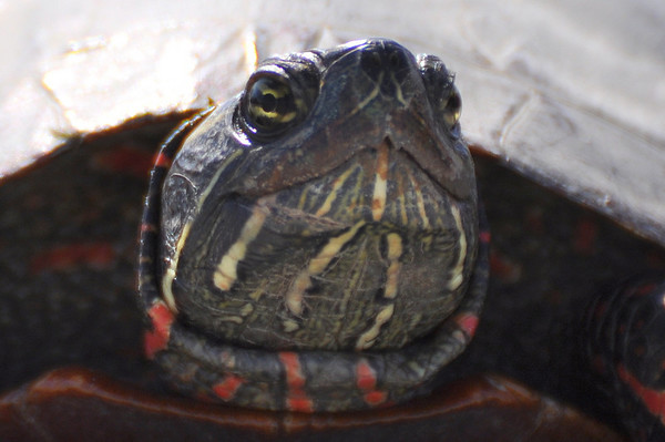 Amphibians (creepy crawlers)