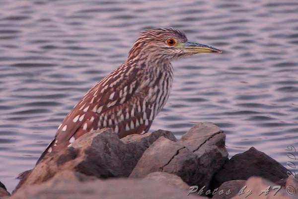 2009-08-31 Riverlands Migratory Bird Sanctuary