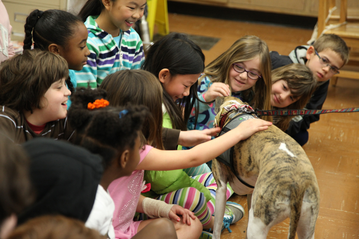 """. Students in Sylviane Cohn\'s 2nd/3rd grade class reach out to pet Ziti, a whippet from the P.A.L.S. program,  at Joaquin Miller Elementary School in Oakland, Calif. on Feb. 15, 2013.  Anya Pamplona, a Humane Advocate, brought a shelter cat named Larry and Ziti to visit the class as part of the \""""Drive to Thrive\"""" program. (Laura A. Oda/Staff)"""