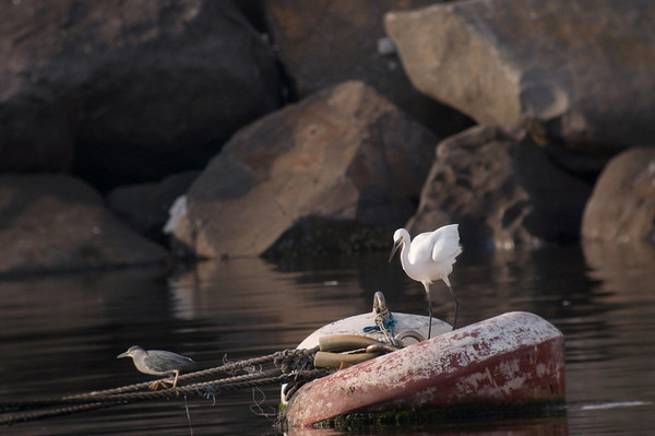 The Story of the Sad Little Heron