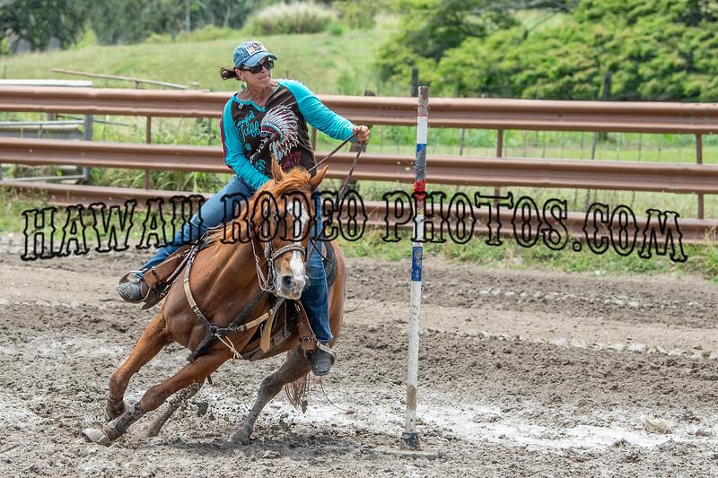 NOVICE HORSE POLES