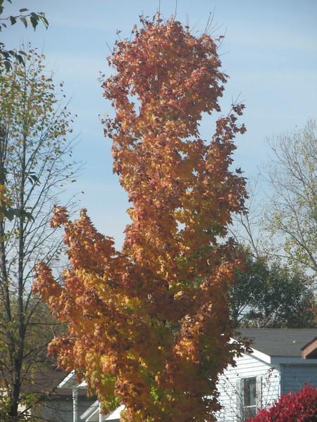 Fall pics 2008 005.jpg