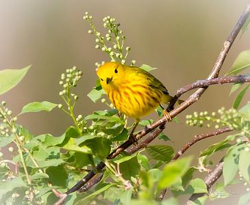 Birds of Indiana 2