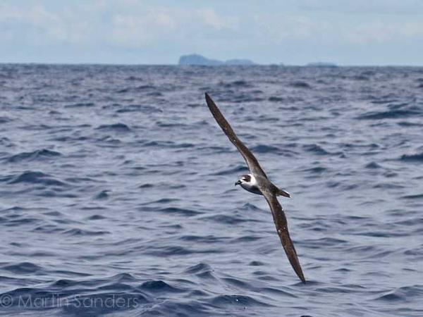 Seabirds assorted