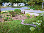 Rain Gardens, photos by others
