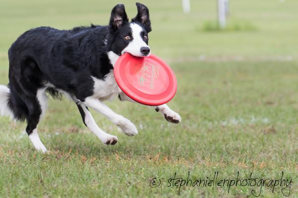 _MG_2727Up_dog_International_2016_StephaniellenPhotography.jpg