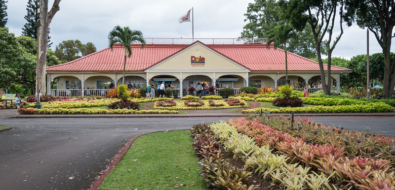 Afternoon treat at the Dole Plantation