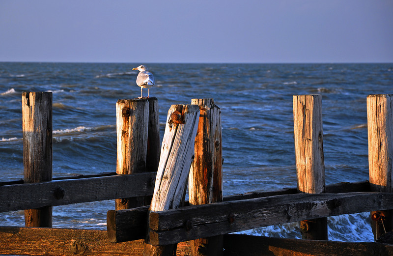 Seagull on pier pilings at Sunset Beach, Cape May, New Jersey