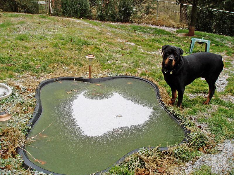 Gino's Pond is Icebound