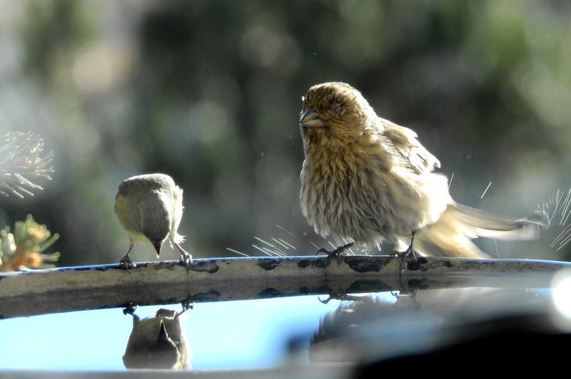 birds (214).JPG