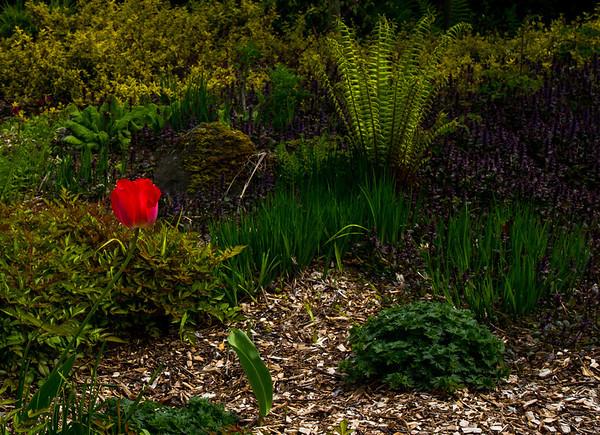 2014-04-27-Arboretum-Color