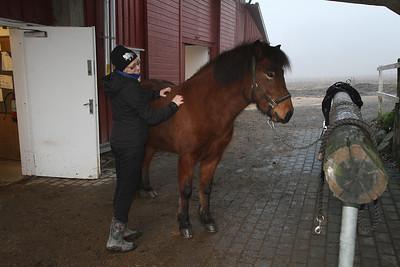 Stall Grønnlund. 24.11.2012
