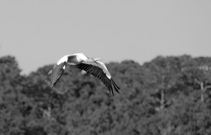 SCOPe_Huntington Beach State Park OCT 2012_1 B&W.jpg