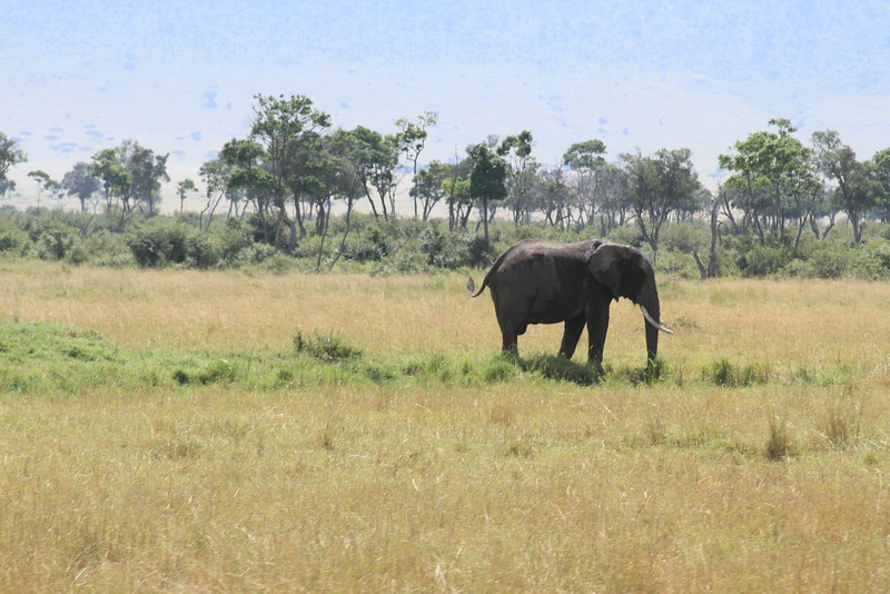 Kenya Part2 '15 877.JPG